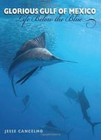 Glorious Gulf Of Mexico: Life Below The Blue