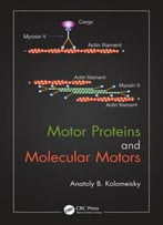 Motor Proteins And Molecular Motors