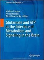 Glutamate And Atp At The Interface Of Metabolism And Signaling In The Brain (Advances In Neurobiology)