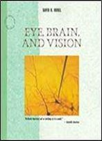 Eye, Brain, And Vision (Scientific American Library)