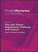 The P53 Tumor Suppressor Pathway And Cancer (Protein Reviews, Vol. 2)